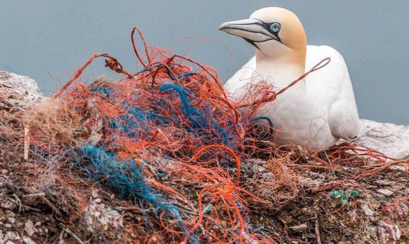 Śmierć oceanu – śmierć planety